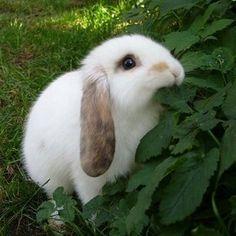 Cuteeee rabbit