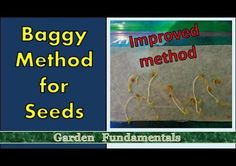 Improved Paper Towel and Baggy Method for Germinating Seeds