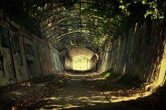 An abandoned mental asylum in Gladesville, Sydney. Photo by Fiona Gohari.