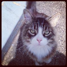 【Kitty #cute #cat #kitty #adorable #iwantyou #animals #instagram】ekarambelas@Instagram