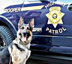 Police dog,, more at www.PoliceHotels.com