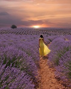 Visit Us On Ig => 🙏🙏🙏cc: Turkey Turkish Europe Discover spanish Journey Explore summer beach sand Ladscape sea desert Artistic Photography, Girl Photography, Life Is Beautiful, Beautiful Images, Lavendar Painting, Mayfield Lavender, Provence Lavender, Valensole, Destinations