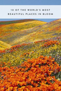 10 of the World's Most Beautiful Places in Bloom
