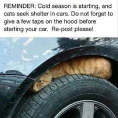 Do not forget to tap on hood before starting car ...