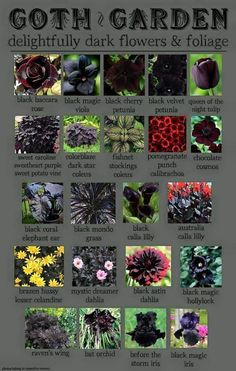 Super Ideas For Flowers Garden Drawing Beautiful Garden Plants, House Plants, Gothic Garden, Witchy Garden, Potato Vines, Dark Flowers, Gothic Flowers, Fresh Flowers, Spring Flowers