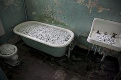 Ai Wei Wei / Alcatraz