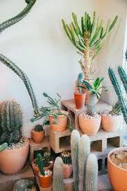 Resultado de imagen para jardines cactus piedras