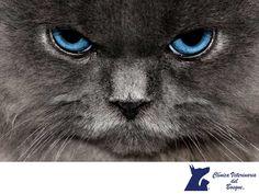 VETERINARIA DEL BOSQUE. ¿Sabías que a consideración de un gato, él es el dueño del lugar en donde cohabita contigo? Por esta razón, los gatos tienden a marcar toda la casa como símbolo de su dominio y tú formas parte de su pertenencia. Si quieres conocer más sobre tips de mascotas, te invitamos a ingresar a nuestra página de internet www.veterinariadelbosque.com, en donde encontrarás interesantes artículos. En Veterinaria del Bosque te ofrecemos la mejor atención para cuidar la salud de tus…