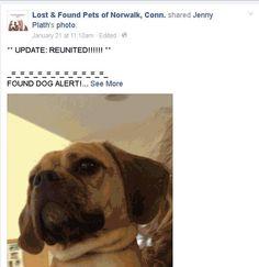 Connecticut's Lost and Found Pets - Companions UPDATE! reunited  https://www.facebook.com/photo.php?fbid=10204899794806881&set=o.1455576667991522&type=1&theater Sharon Boulanger Like ·  · Share · 5 hrs