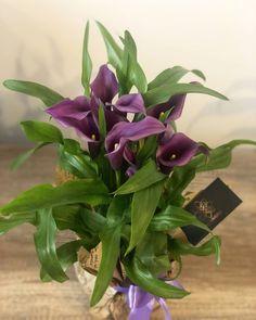 "0 aprecieri, 0 comentarii - BLOOMERIA (@bloomeria.ro) pe Instagram: ""𝚆𝚎 𝚕𝚘𝚟𝚎 𝚙𝚕𝚊𝚗𝚝𝚜 💜🌿 . . #bloomeria #welcometotheworldofflowers #martisor #march #bucuresti #gift…"" Plants, Heart Herbs, Herbs, Purple"