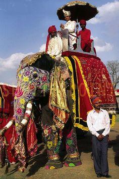 Elephant Festival of Jaipur,Rajasthan,India - Stock Photo Image Elephant, Elephant Love, Elephant Art, Elephant Parade, Goa India, Pakistan, Incredible India, Amazing, Awesome