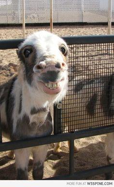 Smiling donkey, love it! :)