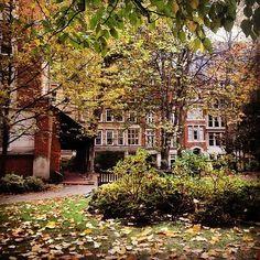 City Tree Walk | 16 Breathtaking Walks To Take In London