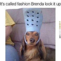 Funny Dogs Memes Just 33 Hilarious Pet Memes - Funny Dog Memes, Pet Memes, 9gag Funny, Funny Animal Memes, Cute Funny Animals, Funny Animal Pictures, Cute Baby Animals, Funny Cute, Funny Dogs