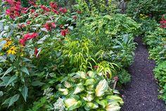 Hosta Great Expectations with Monarda, sedum, Hakonechloa   Plant & Flower Stock Photography: GardenPhotos.com