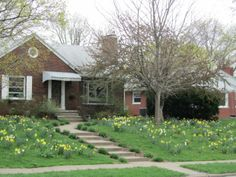"""Still Waters--Notes from a Virginia Shire: """"Surprise Daffodils"""" photo is from qctimes.com"""