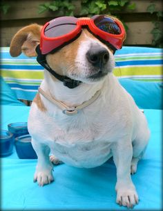 Got my Doggles on. I am ready for a swim. Watch out, Michael Phelps!