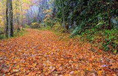 Autumn Breeze 1 Bedroom Cabin Rental in Sevier County