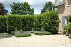 Fastigiate Hornbeam   French Eclectic Garden - traditional - landscape - boston - by Paul ...