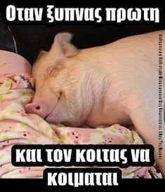 Lol, Funny Quotes, Funny Pictures, Language, Greek, Animals, Image, Words, Humor