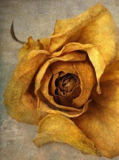 still life photography nature yellow rose nursery decor Shabby Chic Home Accessories, Yellow Home Accessories, Yellow Home Decor, Still Life Photography, Fine Art Photography, Nature Photography, Yellow Photography, Yellow Wall Art, Floral Wall Art
