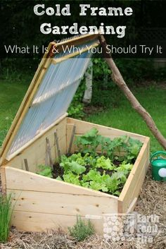 There are many benefits to gardening in a cold frame in cooler climates. Learn what cold frame gardening is, how it will benefit your garden, and what to grow in one to increase your vegetable harvest. #gardening #raisedbeds #coldframe #gardeningtips via @earthfoodandfire