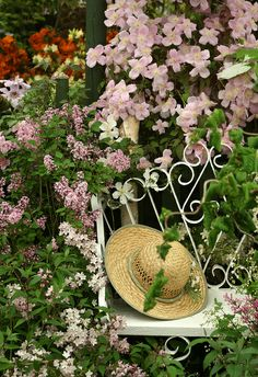 Romantic white iron bench!!! Bebe'!!! Surrounded BT pink blooming dogwood , pink azaleas, and pink lilacs!!!