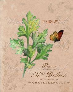 French Botanical Herbs, P