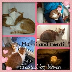 Manni and monti by Raven