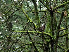 зелёный лес и серо-коричневая птица