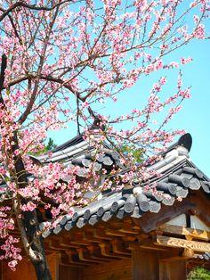 Blooming flowers in April, temple roof, Keimyung University, Daegu, Korea   by Ken Eckert