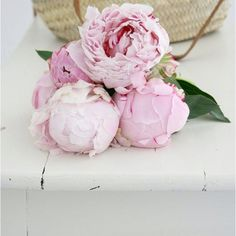 my favorite flowers ever! Peonies I love you! Love Flowers, My Flower, Dried Flowers, Flower Power, Beautiful Flowers, Bouquet Flowers, Cactus Flower, Flowers Nature, Flowers Garden