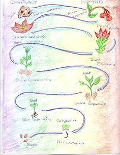 Waldorf ~ 5th grade ~ Botany ~ Plant Growth & Metamorphosis 2 ~ main lesson book
