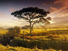 Beautiful Scene Harlech North Wales Field Wallpaper, Free Desktop Wallpaper, Tree Wallpaper, Nature Wallpaper, Wallpaper Backgrounds, Mobile Wallpaper, Green Fields, Nature Tree, Landscape Wallpaper