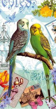 Easter card from Germany - parakeets