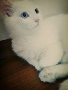 my cat zeus