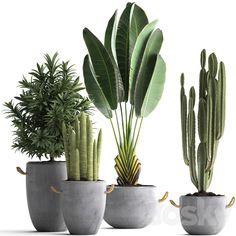 Faux Plants, Potted Plants, Indoor Plants, Indoor Cactus Garden, Plant Design, Garden Design, Pothos Plant, Pot Jardin, Pot Plante
