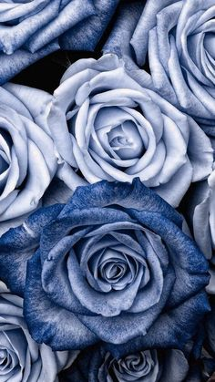 Blue Roses Wallpaper, Flower Phone Wallpaper, Iphone Background Wallpaper, Iphone Backgrounds, Wallpaper Desktop, Blue Aesthetic Pastel, Aesthetic Pastel Wallpaper, Blue Wallpapers, Pretty Wallpapers