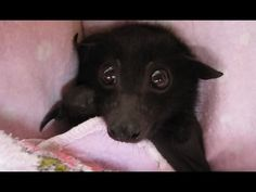 Bats Are Terrifying: Here's Proof (VIDEO) | One Green Planet