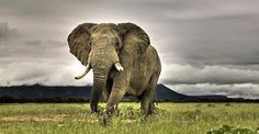 Elefante <3