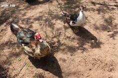 Our 2 legged friends Kwazulu Natal, Holiday Resort, Beautiful Creatures, Scenery, Africa, Ocean, Tours, Camping, Sugar