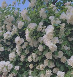 Nature Aesthetic, Flower Aesthetic, White Aesthetic, Story Instagram, Pretty Flowers, Aesthetic Wallpapers, Pretty Pictures, Aesthetic Pictures, Planting Flowers