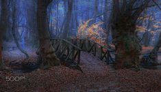 Wooden Bridge                       by Mevludin Sejmenovic