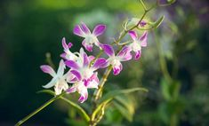 Orchids: here are some simple and effective tips to make them bloom again Growing Orchids, Diy And Crafts, Backyard, Rose, Simple, Orchards, Gardening, Awesome, Gardens