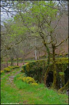 XOAN ARCO DA VELLA: PONTE DE SAN LOURENZO - A LAMA Colorful Trees, Spain And Portugal, Terra, Fields, Beautiful Places, Country Roads, Seasons, Flowers, Bridges