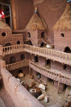 Amazing guinea pig house