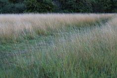 Path Through Meadow. Fulbourn Fen