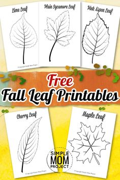 Share in the amazing colors of fall with beautiful, large autumn leaf templates. Whether used as coloring sheets, cards or watercolor paintings, these free printable leaf templates are easy, diy autumn crafts, the kids love. The simple patterns make our autumn leaf templates ideal art projects or stencils for toddlers, preschoolers or kindergartners. Click here to grab your free fall leaf printables today. #fallleaftemplates #fallprintables #autumnleafcrafts Leaves Template Free Printable, Maple Leaf Template, Leaf Printables, Printable Crafts, Free Printables, Fall Arts And Crafts, Autumn Crafts, Fall Crafts For Kids