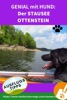 Roadtrip, Wanderlust, Super, Dogs, Hotels, Europe, Travel Alone, Travel Report, Road Trip Destinations