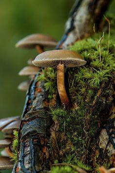 Tree mushroom in moss